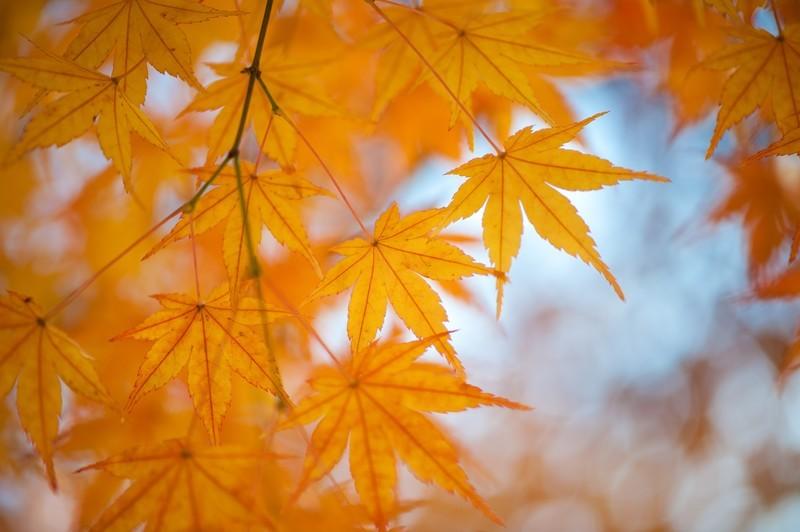 日光の紅葉の名所を訪ねる!美しい秋の観光おすすめコースや絶景スポットをご紹介