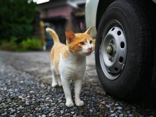 尾道は猫好きにはたまらないスポット!大人気「猫の細道」やかわいいグッズまで