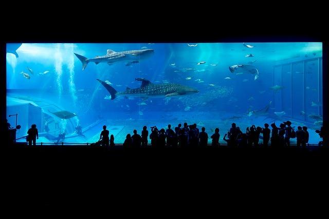 博多の人気水族館・マリンワールドへ行こう!アクセスやイベント情報まとめ