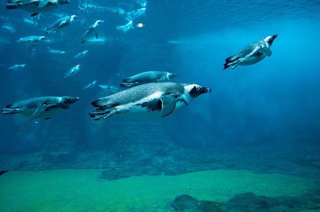 長崎ペンギン水族館の楽しみ方を大特集!人気のお土産やアクセス・割引情報まで