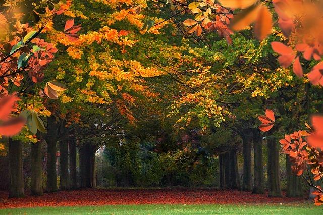 軽井沢の紅葉の名所をチェック!見頃の時期やおすすめのスポットは?