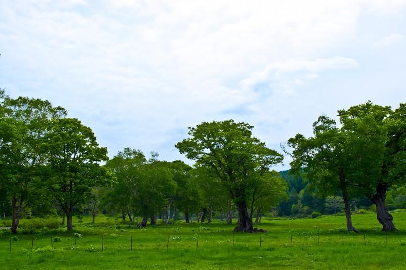 志賀高原の観光は1年中楽しい!春夏秋冬の見どころやおすすめスポットは?