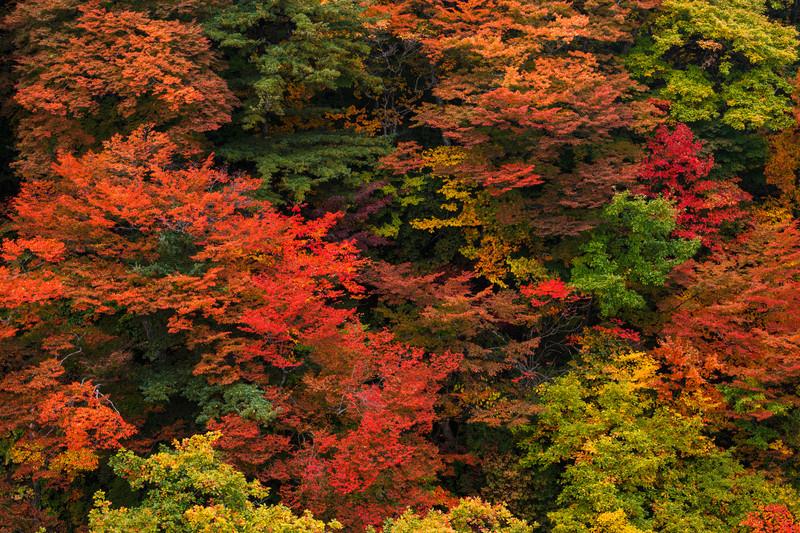 大分・久住山は登山初心者にも人気!紅葉も楽しめるおすすめルートは?