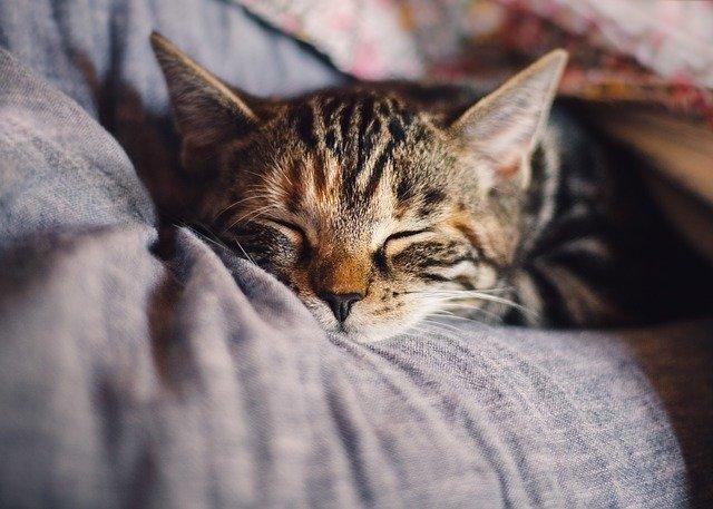 梅田エリアの猫カフェ9選!カップルにもおすすめの癒されるお店をご紹介