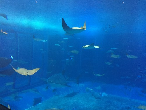 須磨の人気水族館・須磨海浜水族園の料金を徹底解説!お得に使える割引クーポンも