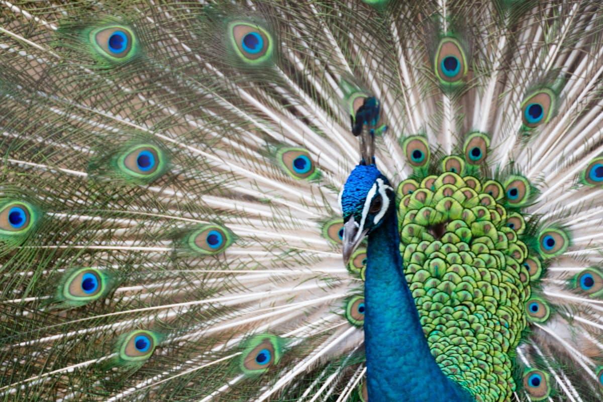 お城が見える動物園「姫路市立動物園」に行こう!営業時間や料金など情報まとめ