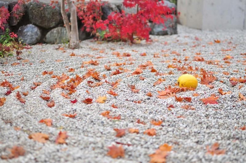 重要文化財の宝庫・大徳寺の特別拝観へ行こう!アクセスや見どころをご紹介