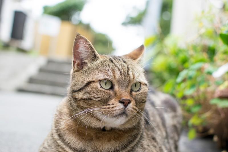 福岡・藍島の観光情報まとめ!フェリーを使った行き方や猫について調査