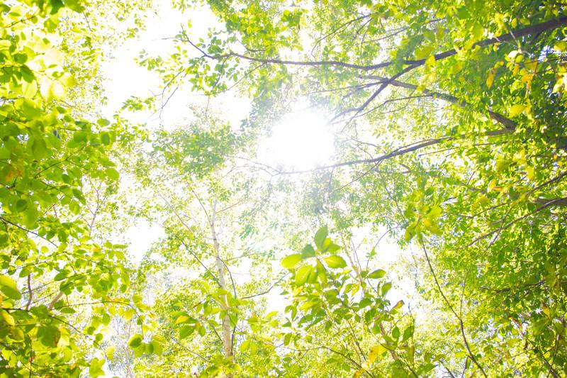 「おもはらの森」はランチやデートにぴったり!営業時間や場所をご紹介