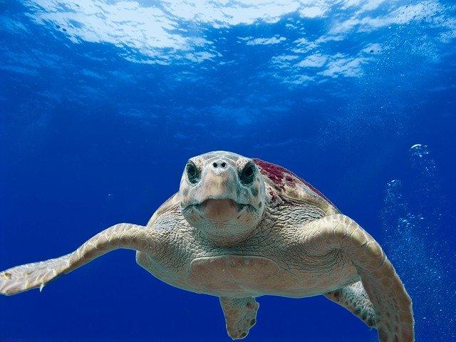 奄美大島の海をシュノーケリングで楽しもう!ウミガメと泳げるスポットがあるの?