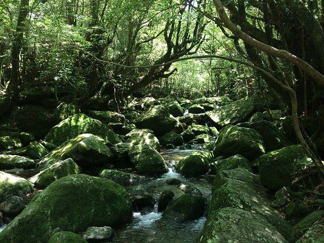 屋久島でおすすめの観光スポット21選!魅力いっぱいの離島の名所や穴場は?