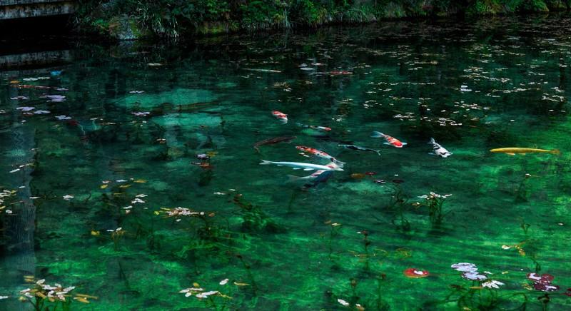 岐阜で知る人ぞ知る人気・モネの池!見頃やアクセスと周辺の見どころは?