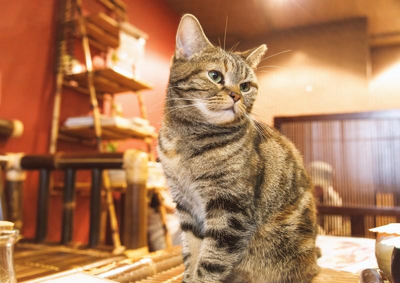 猫居酒屋で癒しの時間を過ごそう!東京都内の猫がいる居酒屋・バーをご紹介