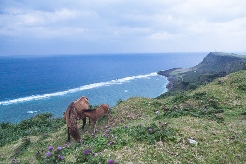 和歌山の加太でおすすめの観光スポット21選!グルメやレジャーに魅力がいっぱい