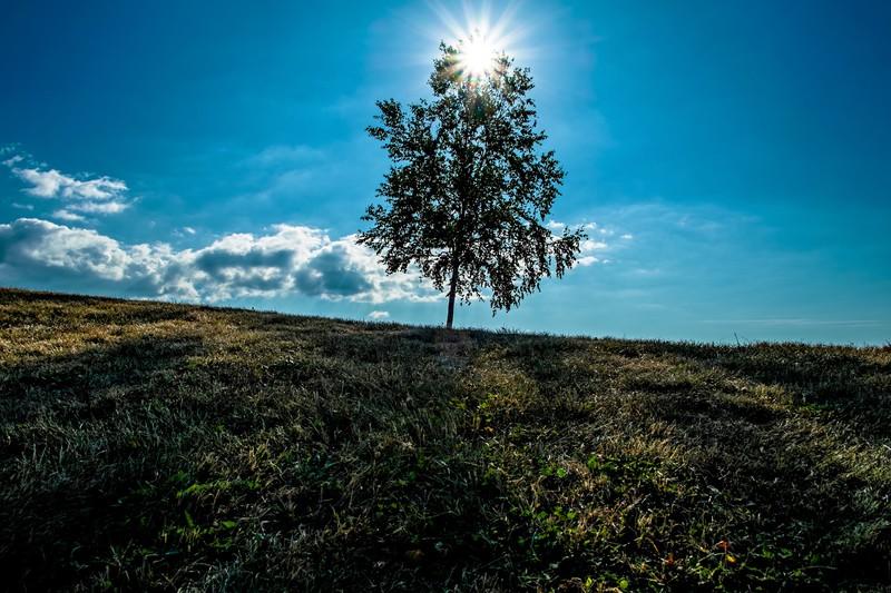 美瑛の「セブンスターの木」について調査!タバコのCMでも有名な絶景の観光地!