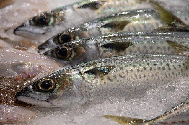 石巻魚市場を楽しむための見どころをチェック!市場見学や周辺情報もご紹介