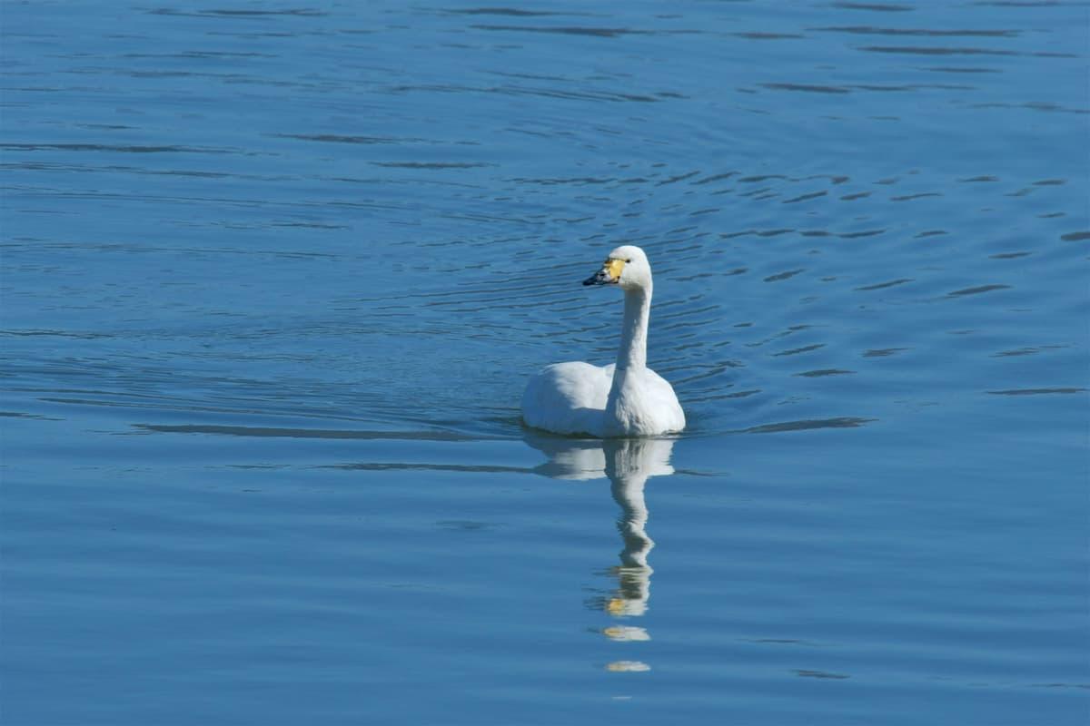 「君の名は」の聖地・諏訪湖から聖地巡礼をスタート!外せないスポットは?