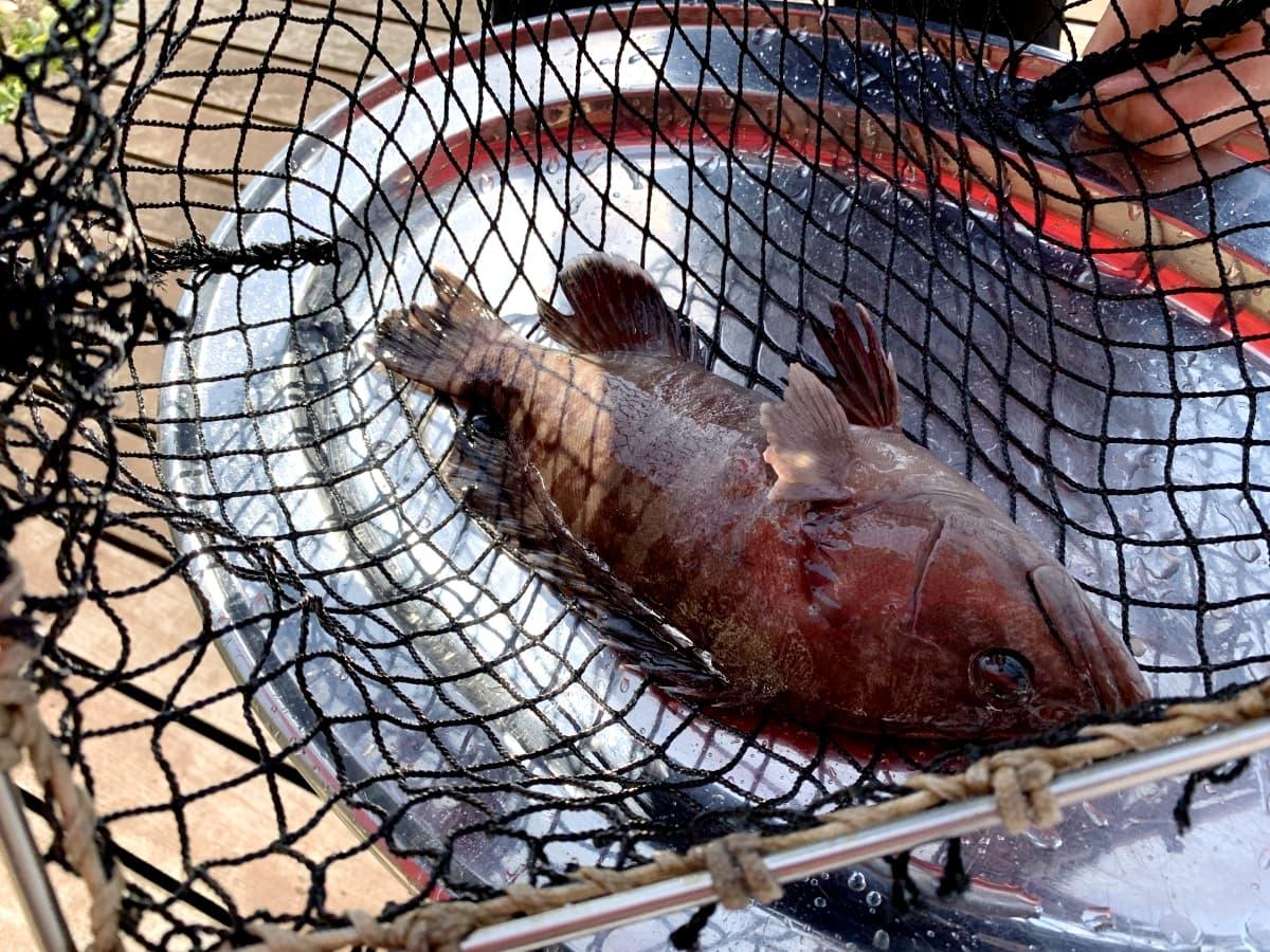 和歌山・白浜にある「とれとれ市場」が熱い!釣りに海鮮丼にBBQも楽しめちゃう