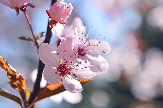 埼玉の梅スポットまとめ!穴場から有名梅林の梅まつり情報も!