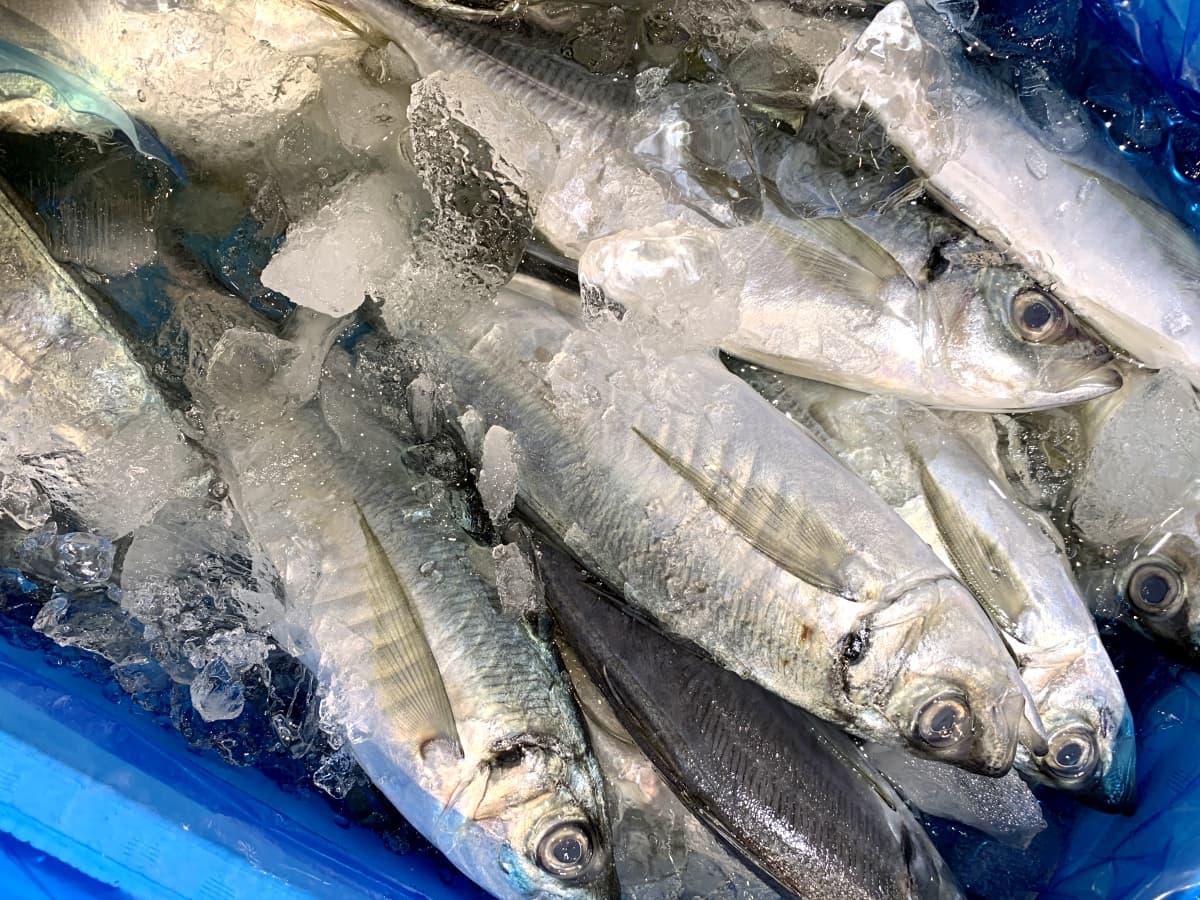 三浦半島のおすすめグルメを満喫したい!絶品海鮮ランチから穴場スポットまで紹介
