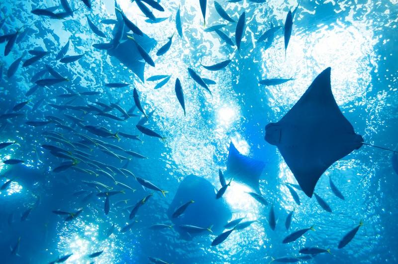 箱根園水族館の楽しみ方特集!日本一高い海水館の魅力・口コミ・クーポンまで紹介