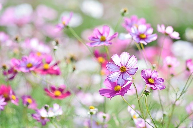 神代植物公園は花いっぱいの人気スポット!アクセスや入園料を徹底ガイド