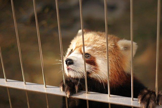 「風太くん」に会える千葉市動物公園へ!ライオンも見られるおすすめスポットとは