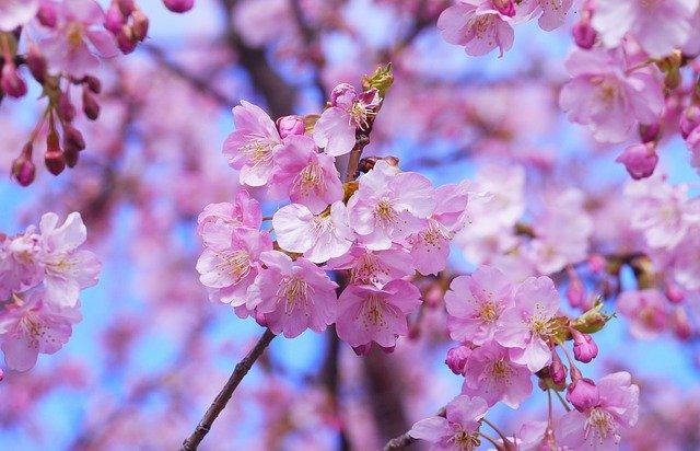 千葉・泉自然公園は県内屈指の桜の名所!親子で楽しめる自然豊かな場所をご紹介