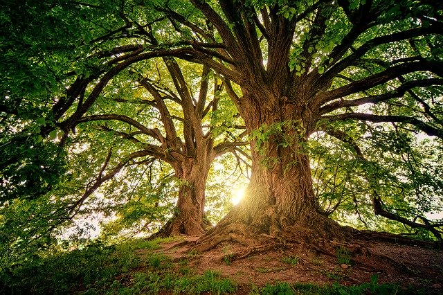 県立四季の森公園は自然を感じる人気スポット!見どころやアクセス方法は?