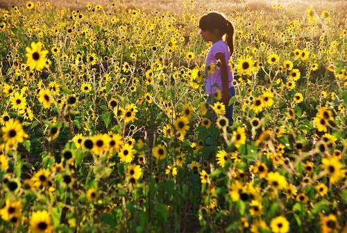 向日葵と少女