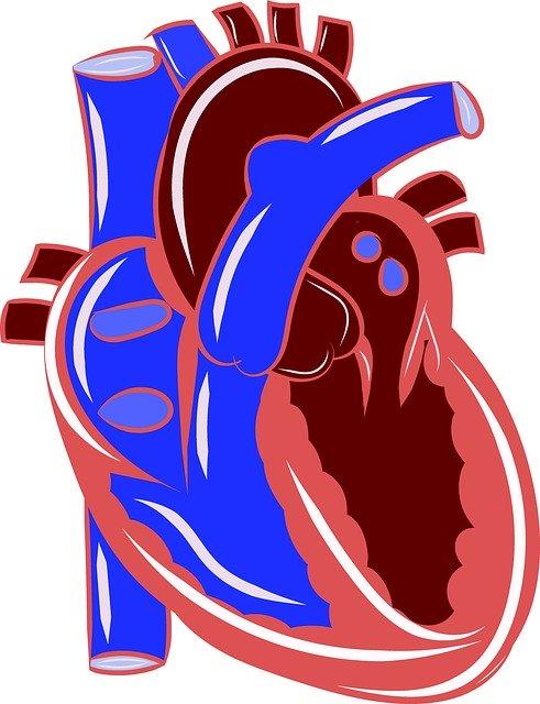 心血管疾患