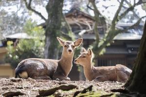 奈良弁の特徴・かわいい挨拶・告白フレーズなど方言を一覧で紹介!