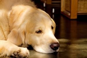 犬食いの意味・原因・直し方まとめ!正しい食べ方とNGマナーをチェック!