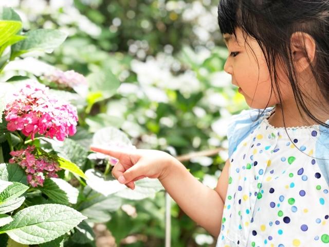 女の子の花の名前を一覧で紹介!季節ごとにおすすめの花言葉や誕生花をチェック!