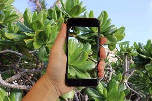 iPhone7が水没した!対処法・水没マークについてや耐水性なども調査!