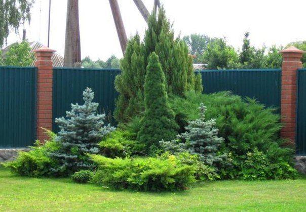 コニファーの種類・品種のおすすめまとめ!庭木で人気の理由や特徴・栽培方法は?