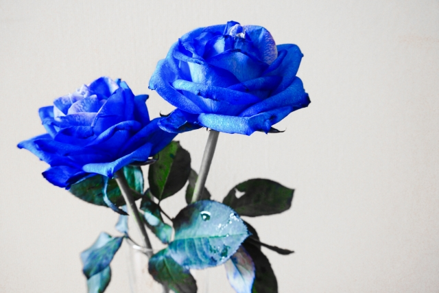 薔薇 言葉 青 花