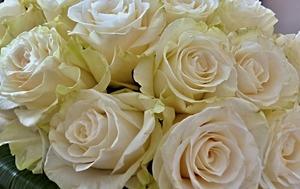 白い薔薇の花言葉を詳しく紹介!人に贈るときは本数に注意しよう!