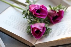 アネモネの花言葉は?色別・種類別の意味や由来も詳しく解説!
