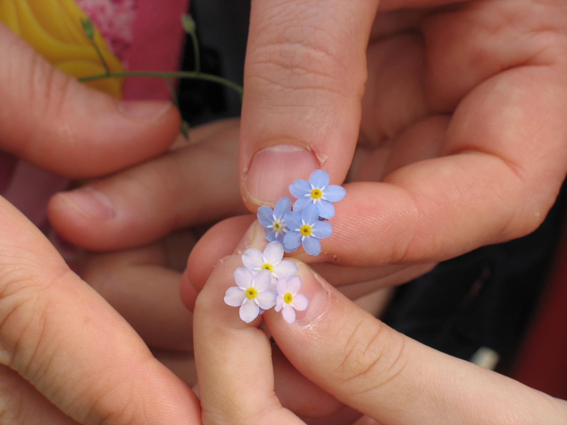 勿忘草の花言葉とは?英語の意味・由来やドイツに伝わる伝説についても紹介!