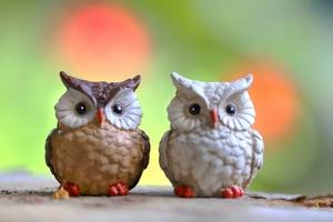 フクロウの種類や値段を紹介!ペットとして飼いやすく人気があるのは?
