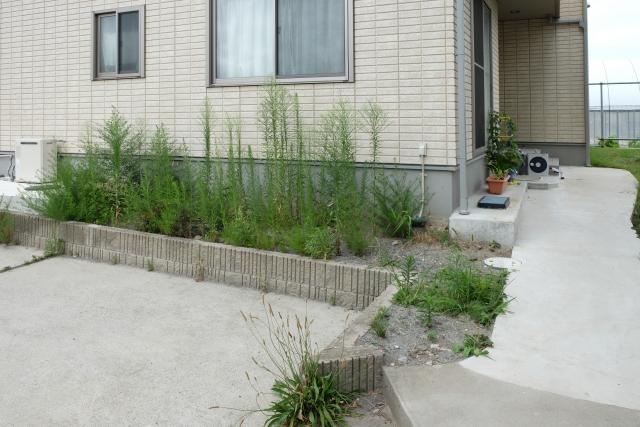 雑草は熱湯をかけると駆除できる?必要なお湯の温度や効果を解説!