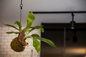 観葉植物を吊るすおしゃれな飾り方ガイド!おすすめのプランターもチェック!