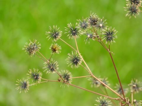 雑草の種類・見分け方まとめ!一年草・多年草の違いや除草法も紹介!
