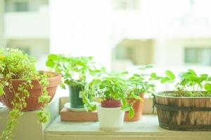 観葉植物をインテリアに取り入れるコツ!おしゃれな飾り方の例も紹介!