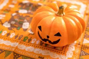 かぼちゃの種類はこんなにたくさん!品種の見分け方や特徴を解説!
