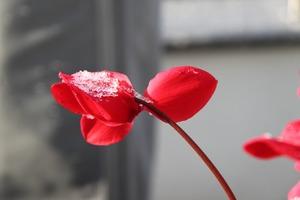 「雪月花」の意味まとめ!使い方・例文や語源・類語・英語表現も紹介!