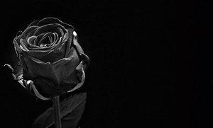 黒薔薇の花言葉まとめ!意味・由来や贈る場合に気をつけるポイントは?