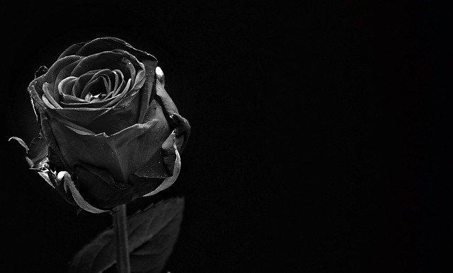黒薔薇の花言葉まとめ!意味・由来や贈る場合に気をつけるポイントは? | Kuraneo