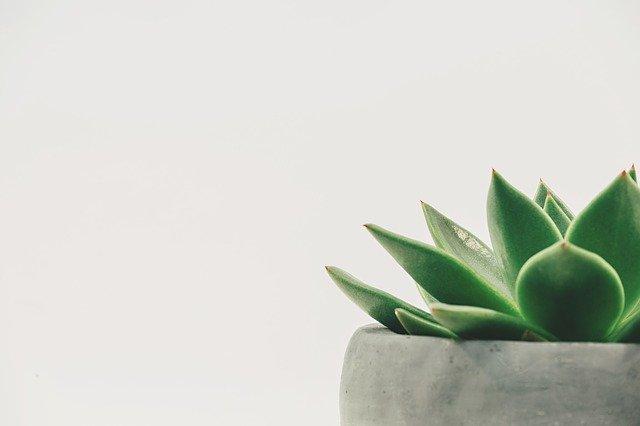 100均ダイソーで買える観葉植物は?おすすめの種類や育て方を紹介!